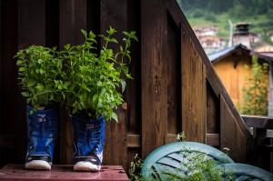 Snowboard-Boots-plants-flower-pots
